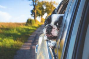 Utah Dog Laws