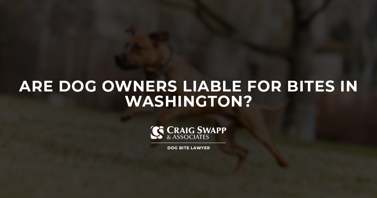 Are Dog Owners Liable for Bites in Washington? | Craig Swapp